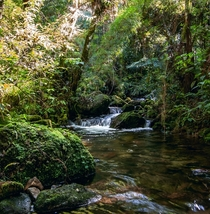 Small river in Brazilian jungle Campos do Jordao Brazil
