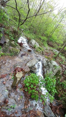 Small stream crossing the Appalachian trail after heavy rains