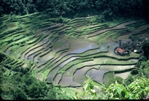 Small Village in Rice Terraces near Banaue Philippines  by Willard Losinger