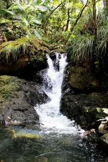 Small waterfall - Rio Espiritu Santo El Yunque National Forest  x