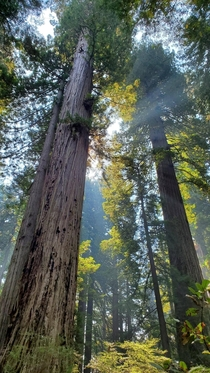 Smoke from the wildfires actually caused some beautiful sun rays in Redwoods NP