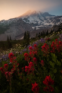 Smoky skies during a summer sunset in Mount Rainier National Park Washington State USA
