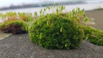 Smol patch of moss on a flood wall on the banks of River Rhine