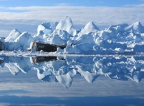 Smooth waters provide a mirror-like reflect of icebergs in the harbor at Ilulissat Greenland Frank Walley