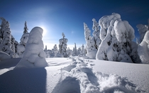Snow can be extremely beautifull Lapland Finland