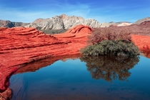 Snow Canyon Park Utah