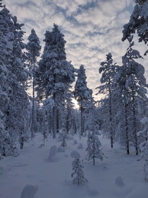 Snow covered forest close by Kittila Finland
