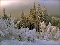 Snow-covered forest in Mal Fatra National Park Tatra Mountains Slovakia