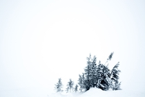 Snow covered trees in the Swedish mountains or fjll as we tend to call them