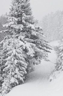 Snow-Covered Trees in Tyrol Austria