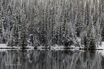 Snow covered trees reflected in a high  ft mountain lake Colorado