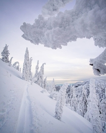 Snow ghosts in the Selkirk Mountains British Columbia
