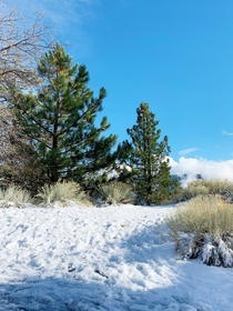 Snow in Big Bear With bright skies and trees