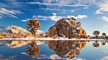 Snow in Joshua Tree National Park California  by unknown