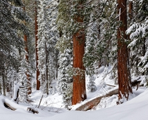 Snow in Sequoia National Park CA