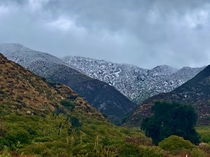 Snow in the Foothills of Los Angeles Thanksgiving morning  x