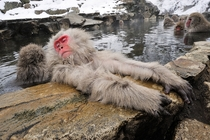 Snow Monkeys enjoying a warm bath
