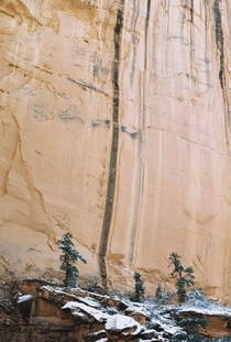 Snow ponderosas and red rock in Grand Staircase-Escalante UT shot on film OC