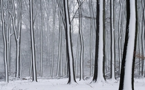 Snow Striped Forest xpost from rpics