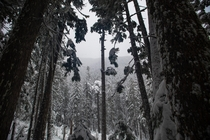 Snowing Intensifies Olympic National Park Washington  Instagram green_cale