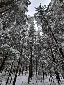 Snowy forest Estonia