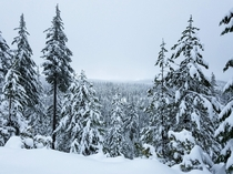 Snowy Forest in the Cascade Range OR