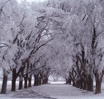 Snowy path between frosted trees unknown location