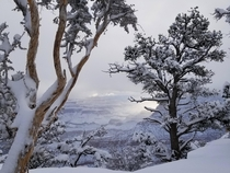 Snowy Sunrise through Junipers and Pinyon Pines at Grand Canyon National Park