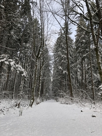 Snowy Trails - Vancouver BC Canada