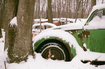 Snowy Volkswagen Beetle graveyard shot on film