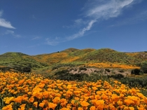 So Cal Superbloom