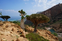 Socotra Island Yemen Just magical