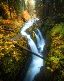 Sol-Duc with fall colors - Olympic National Park WA OC  IG explore_with_tristan