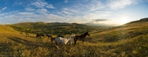 Solar yoga for wild horses in Livno Bosnia