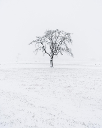 Solitude  I find myself driving past this lone tree everyday on my way to work here in Interlaken Switzerland hardly paying any attention to it It was not until a recent snow storm here that I noticed the beauty and photographic potential of this tree Ins