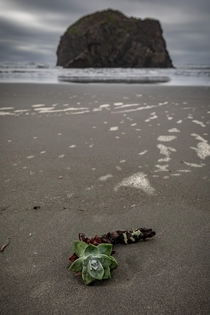 Solitude is a peaceful thing - Oregon Coast -  - IG travlonghorns