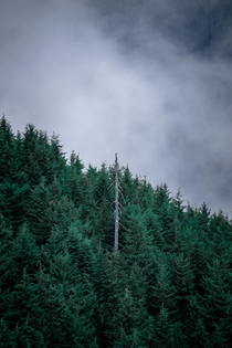 Solitude  Sunshine Coast Trail British Columbia   X   OC  pawel_migdal_