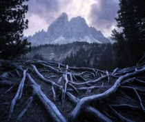Some cool roots on a cloudy day in the Dolomites Utia de Borz Italy  x