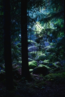 Some dark vibes from my favourite forest  Central Finland