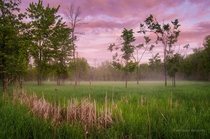 Some mist began to develop as I photographed this clearing in Ottawa Ontario  x Michael Higgins