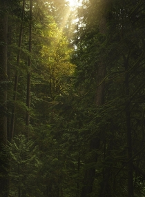 Some nice light in the forest Cypress Falls BC  tristantodd