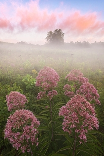 Some pretty weeds at sunrise These things are actually ft tall Cuyahoga Valley National Park OH OC