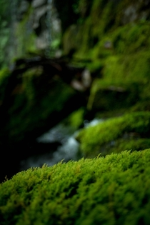 Some quality moss -- Old Highway  Trail Montana