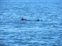 Some seals that kept us company as we kayaked