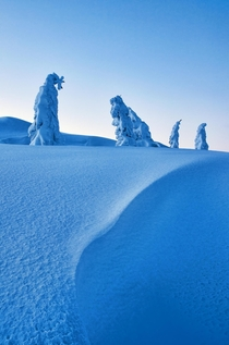Some very cold snowmen in blue hour I love trees that look like trolls Kongsberg Norway