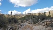 Somewhere in Sabino Canyon Tucson AZ