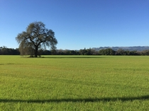 Sonoma County After a Rain