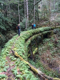 Sooke Flow Line Built  abandoned - in Sooke BC Canada x