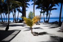 South Water Caye Belize - A Simple Morning