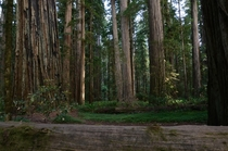 Speaking of Redwoods Jedediah Smith Redwood State Park California
